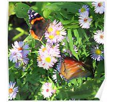 Fluttering Butterflies Poster