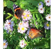 Fluttering Butterflies Photographic Print