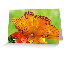 Gulf Fritillary Greeting Card