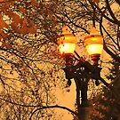 Street Lights in Kitchener by Anatoliy