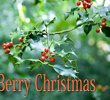Berry Christmas by DonDavisUK