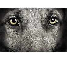 Dog Fun Photographic Print