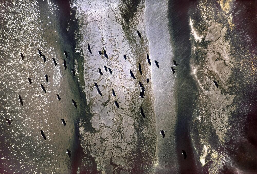 ibis above a receeding shore by victor