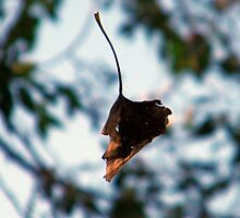 Leaf In Mid Air by R&PChristianDesign &Photography