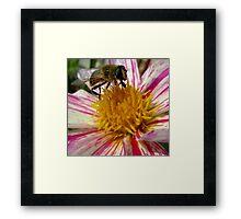 BeeGlee Framed Print