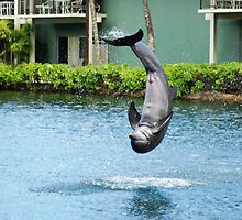 Dolphine 2 by Teela Bryant
