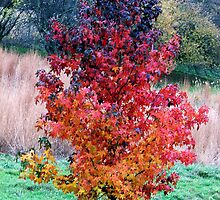 The Rainbow Tree by LavenderMoon