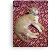 Wild Bill Hickock Kitten says he KNOWS He is cute Canvas Print