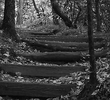 Mt. Pisgah Steps by Chipper