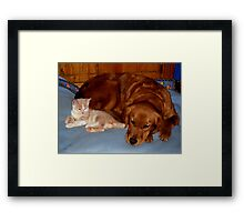 Wild Bill Hickock Kitten and Penelope sharing the doggie bed Framed Print