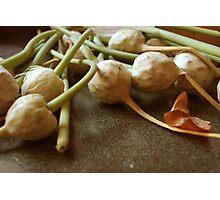 Garlic Flowers Pre-Bloom Photographic Print