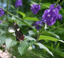 Butterfly Stop by Tanya Kenworthy-Mosher