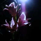 Lighted Flower by davesphotographics
