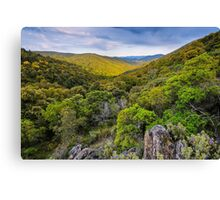 The forest under the clouds Canvas Print