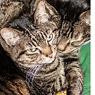 Two Cats Snuggled Together by Sue Smith