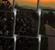Cornfields with sundown | landscape photography Sticker