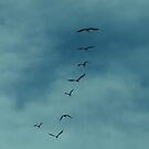 Pelican Silhouettes by Michelle *