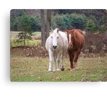 Who says Old Arabian cant gain Weight Canvas Print