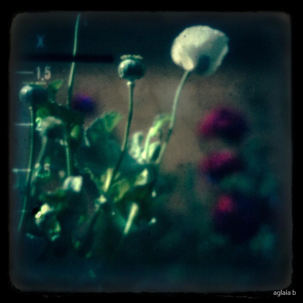 even poppies sleep by aglaia b