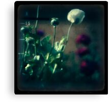 even poppies sleep Canvas Print