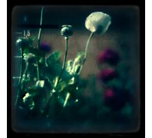 even poppies sleep Photographic Print