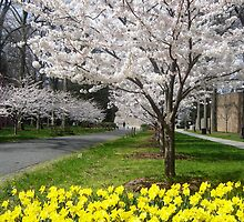 Princeton in Spring by clizzio