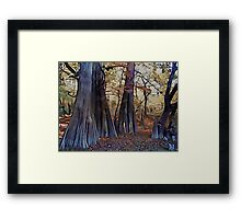 Old Cypress Framed Print