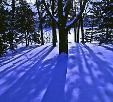 Winter Shadows 2 by Tom  Reynen