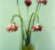 Wilted Gerberas by Robert Hoehne
