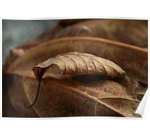 Little Leaf At Rest Poster