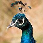 Peacock by Vickie Burt