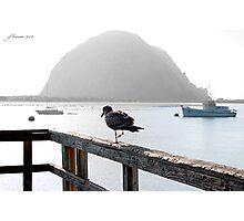 Bird's Eye View Photographic Print