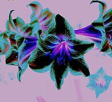 hippyastrums1 by Fraser Linden
