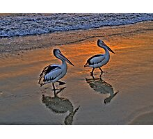 Pelican Reflections - Balmoral Beach - The HDR Series Photographic Print