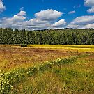 Summer in Germanys Black Forest (I) by Bernd F. Laeschke