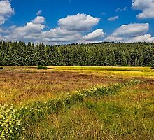 Summer in Germanys Black Forest (I) by Bernd F. Laeschke