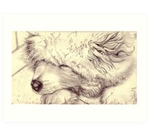 Sleeping Samoyed Art Print