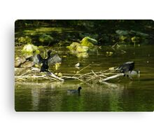 Two Shags on a Stick Canvas Print