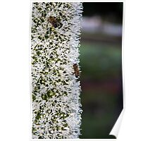 Grasstree flower with bees Poster