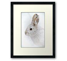 Showshoe Hare Framed Print