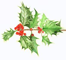 Christmas Holly by Denise Martin
