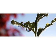 Droplet 2 Photographic Print