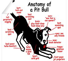 Anatomy of a pitbull by zalfotarum