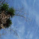 sky  by Lynn  Gettman