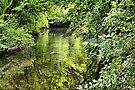 A Green Paradise by Jo Nijenhuis