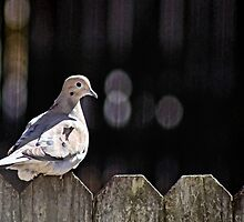 Little Bird on the Fence by WeeZie