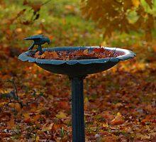 Fallen Leaves by babyangel