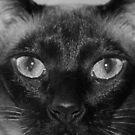 cats eye by natnvinmom