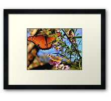 The Beautiful Monarch Framed Print