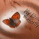 Elusive Butterfly by Robert Abraham